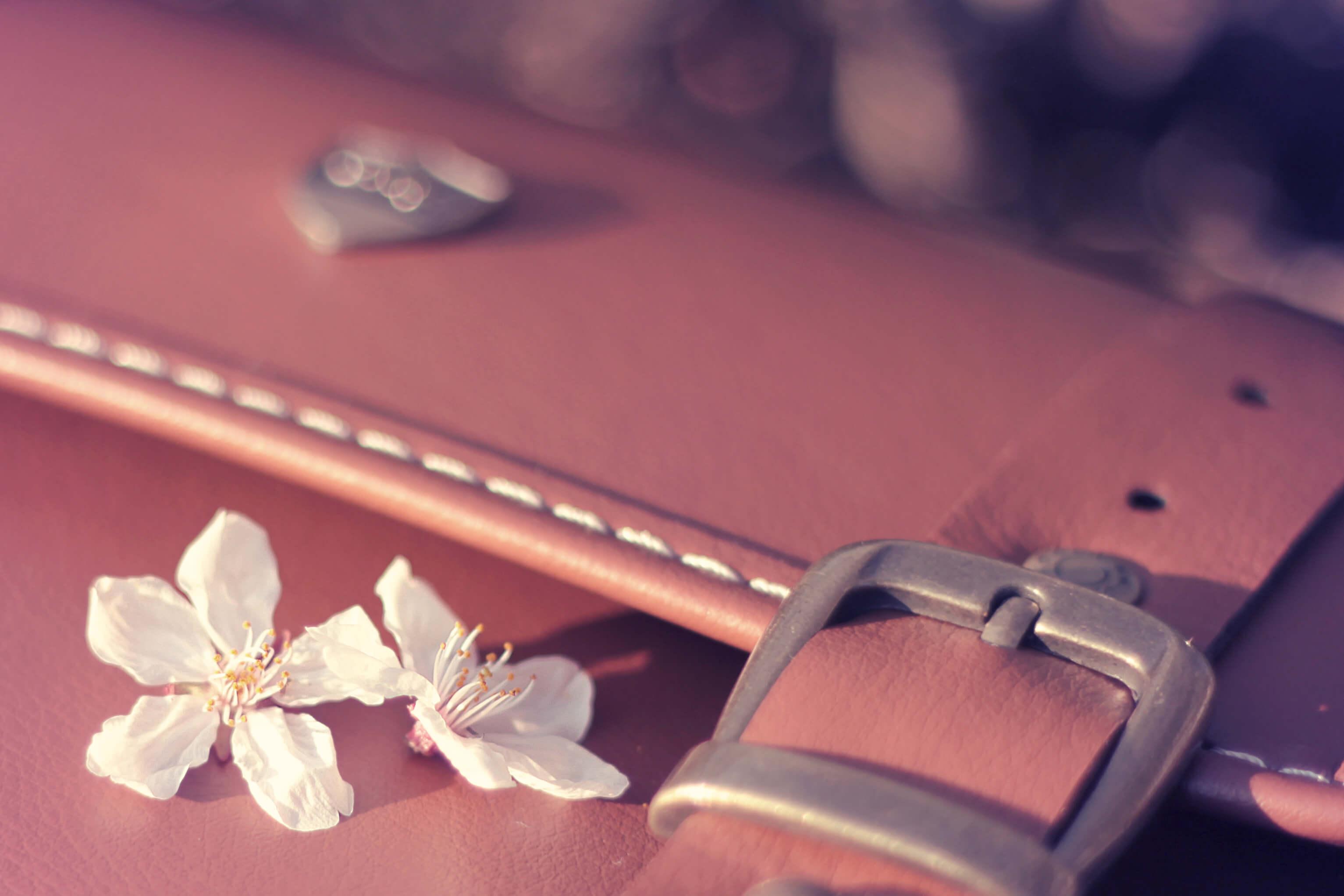 落ち葉と桜の花びらが告げる冬の終わり/春の始まり