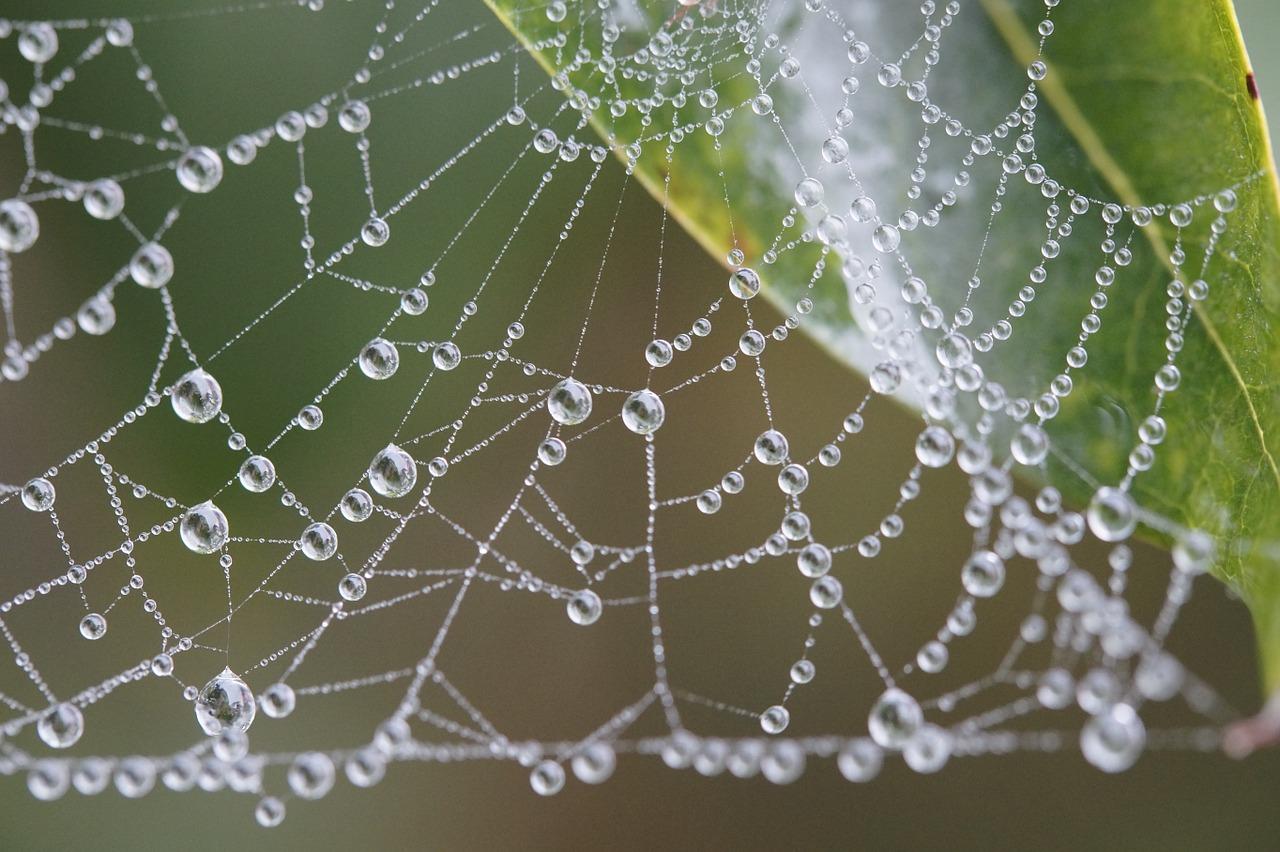 クモの網にかかった美しい水滴